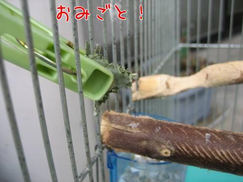ユーカリ③