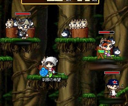 Maple00012.jpg