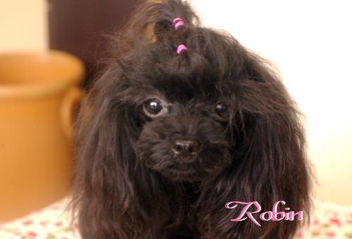 robinチャン
