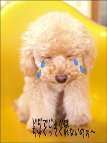 泣いちゃう?