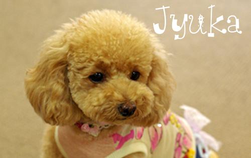 jyuka_20081030194922_20090728105143.jpg