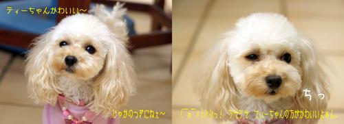 tiara_20090218235219.jpg