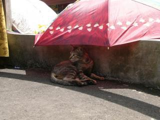 バリの市場の猫