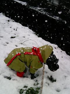 雪 うんp