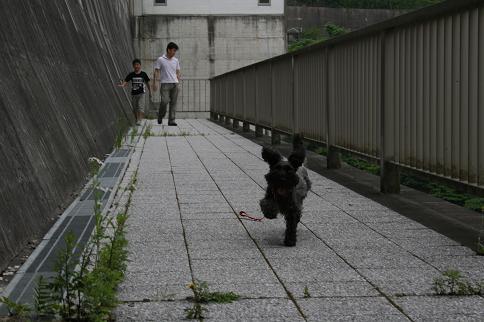 日吉ダム7