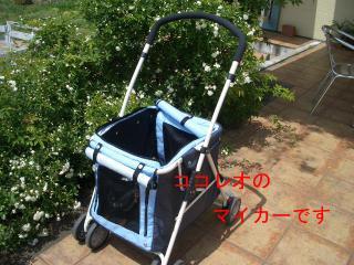 CIMG1156.jpg