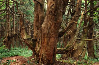 幻想の森 YS0_1876