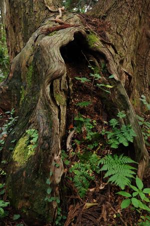 幻想の森 YS0_1846