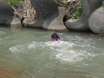 泳ぐチャマ1
