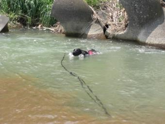 泳ぐチャマ2