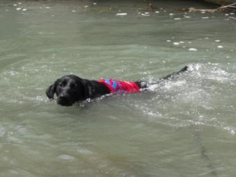 泳ぐチャマ3