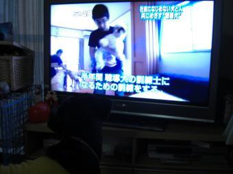 テレビ 茶ま
