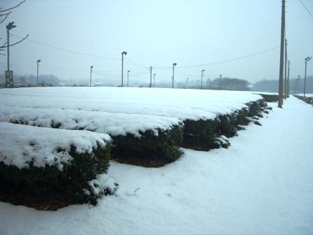 雪景色の茶園2008.01.23