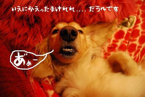 DSC_0243a.jpg