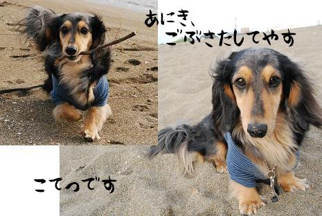 DSC_shiroa_20090612115358.jpg