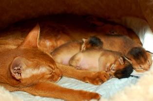 母と寝る1006