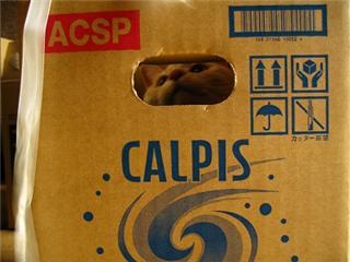 calpispote.jpg