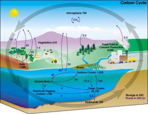 Carbon_cycle-cute_diagram.jpg