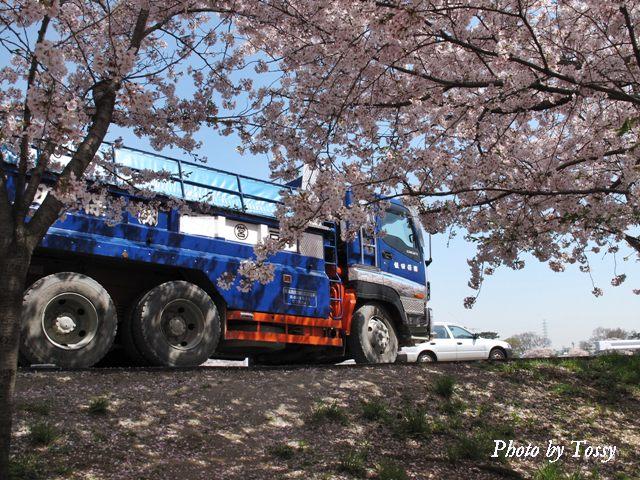 桜の下を走るダンプ2