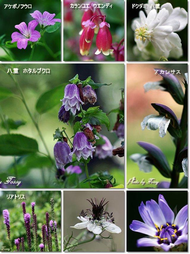 6月の花 コラージュ