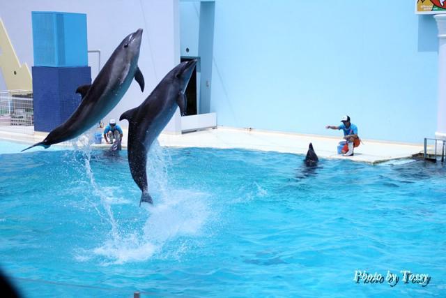 イルカ そろってジャンプ!