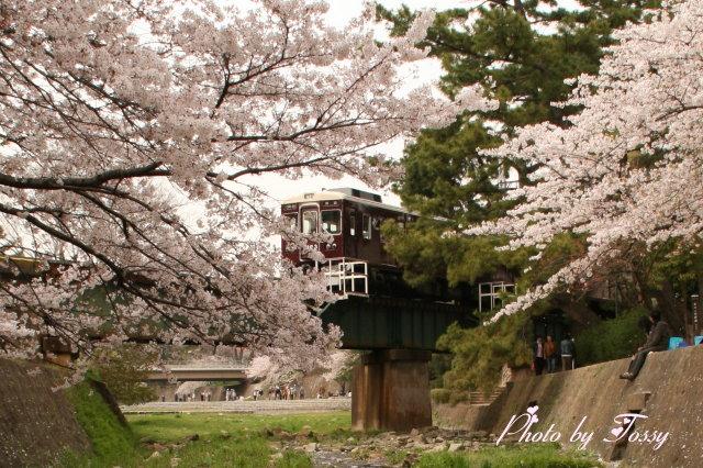 桜の中を行く電車2