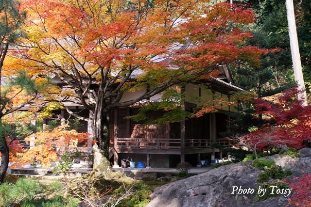 紅葉の古木 護摩堂