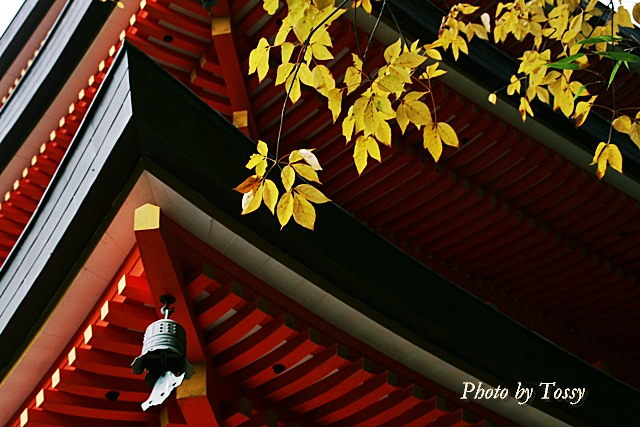三重塔と黄葉