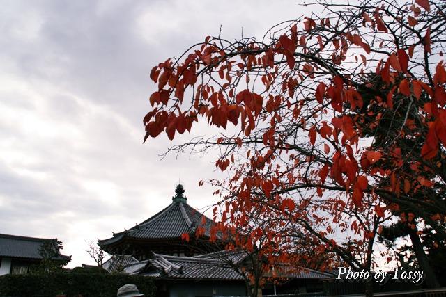 南円堂と桜の紅葉