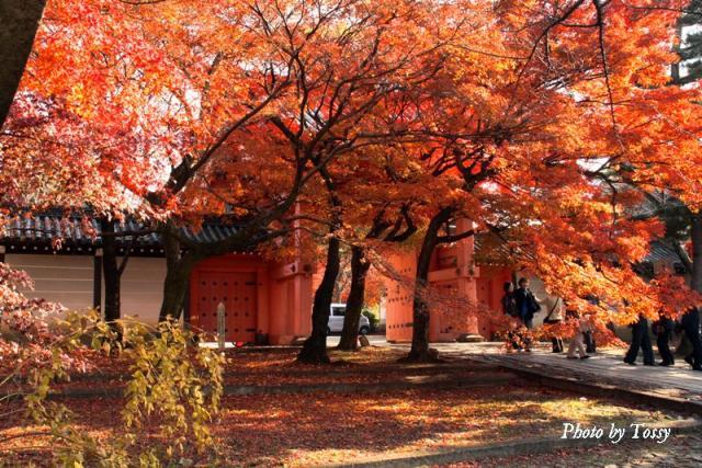 門前の紅葉
