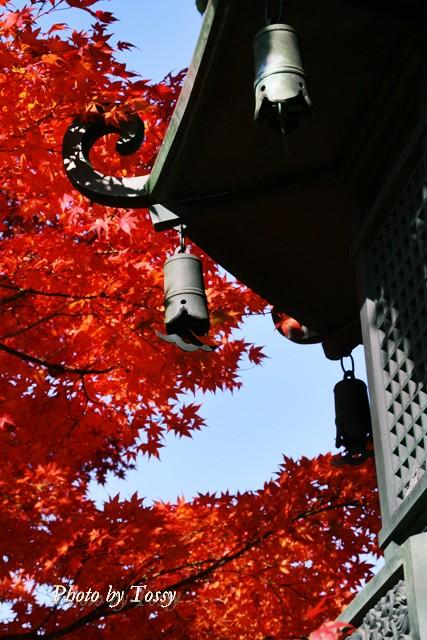 灯篭と紅葉と青空