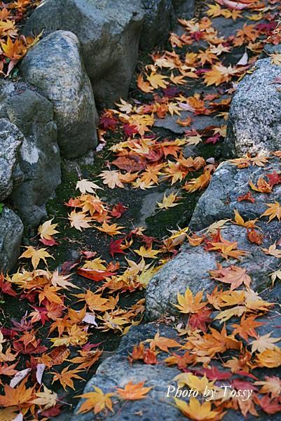 落ち葉の石段