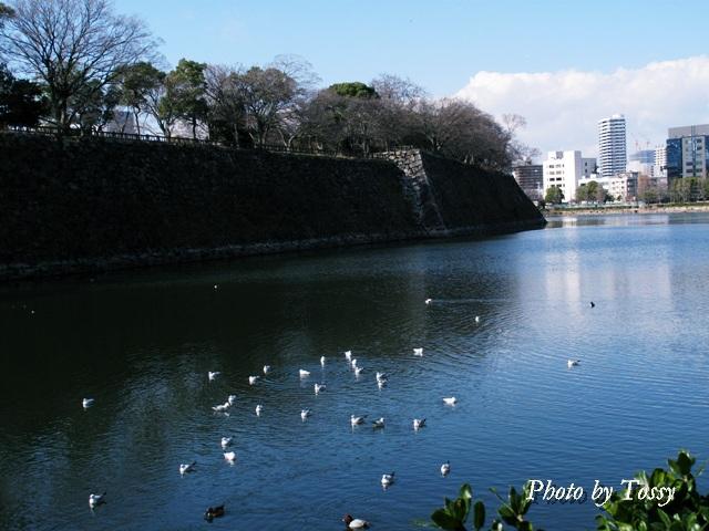 大阪城外堀1