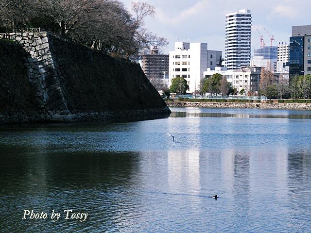 大阪城外堀2