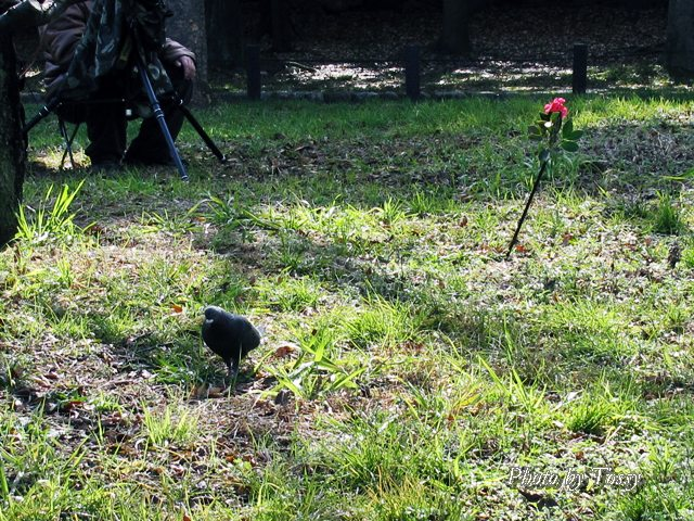 鳥撮影の仕掛け