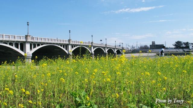 菜の花と武庫大橋