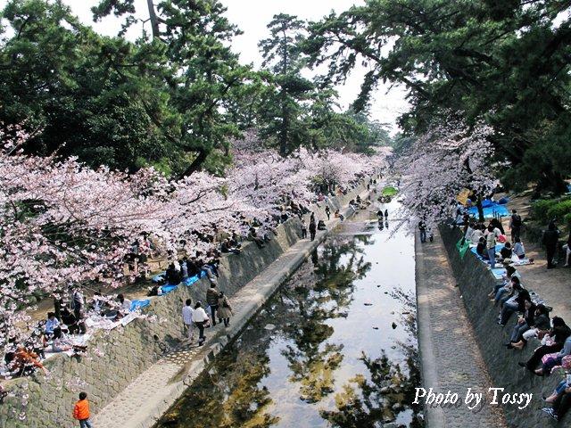 大井手橋から 下流を望む