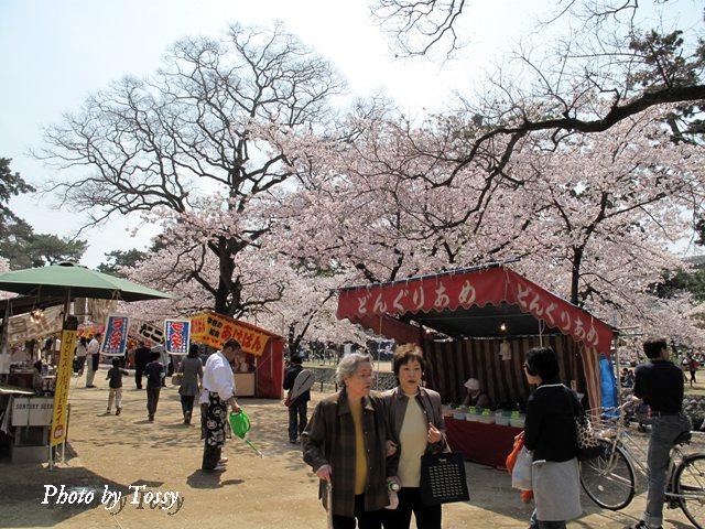 8日の夙川風景