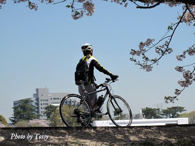 堤防の自転車