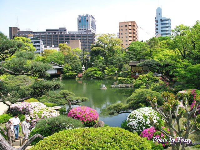 相楽園の日本庭園1