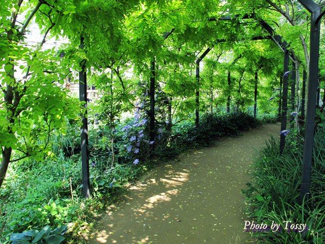 緑のパーゴラ
