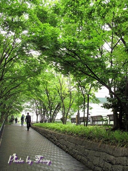 緑陰歩道1