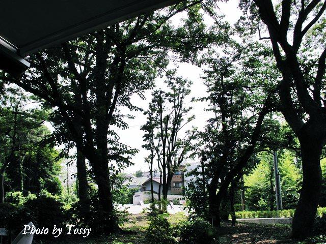 木立と石橋門