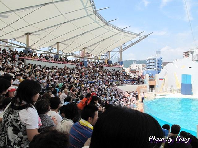 イルカライブは大人気