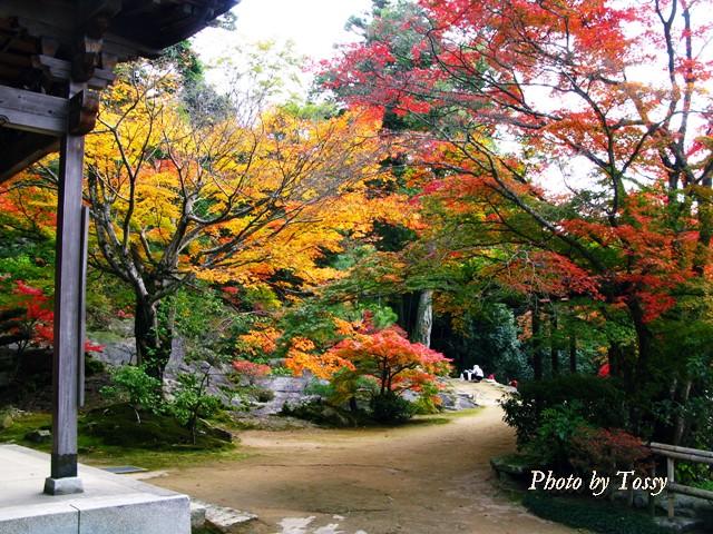護摩堂前の紅葉