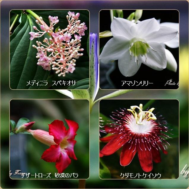 珍しい花 コラージュ
