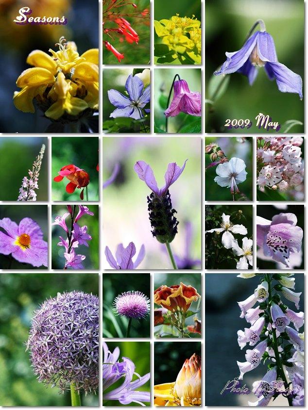 シーズンズお花たち