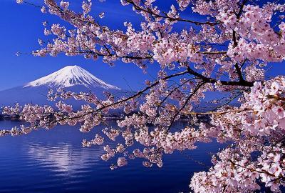 桜 富士400