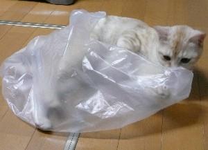 asuka_hukuro01.jpg