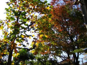 木々の色づき